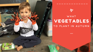 what vegetables to plant in autumn